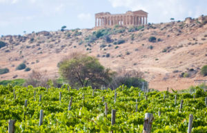 valle-dei-templi-vigne
