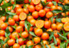 agrumi di sicilia