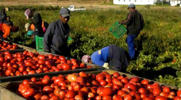 Pomodoro marocchino